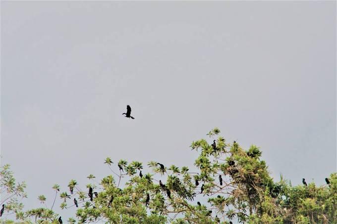 Thăm sân chim Vàm Hồ  Sau một thời gian dài đóng cửa để bảo tồn, sân chim Vàm Hồ đã mở cửa trở lại chào đón du khách. Đến đây du khách có thể bắt gặp hơn 100 loài chim khác nhau. Có những cá thể gần như tiệt chủng nhưng chúng đang trú ngụ tại sân chim Vàm Hồ.
