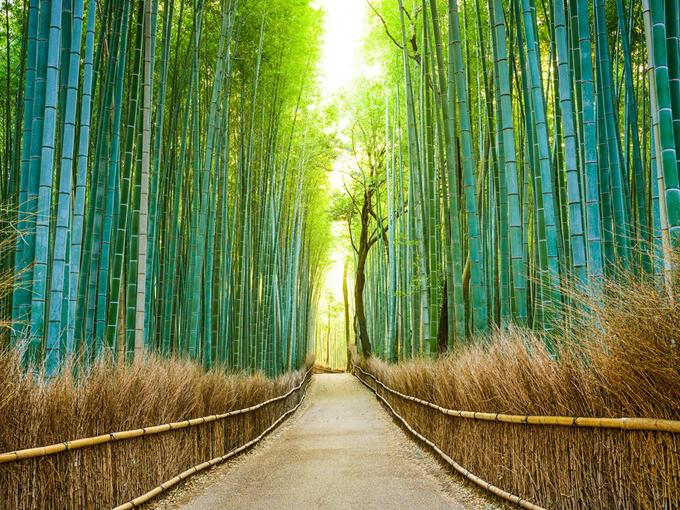 Rừng trúc Arashiyama ở Kyoto luôn đứng đầu trong danh sách những điểm đến hấp dẫn nhất không chỉ ở cố đô Kyoto mà còn ở toàn nước Nhật. Con đường mòn kéo dài khoảng 400 m rất nổi tiếng và thường được dùng làm nơi để quay phim hoặc quảng cáo. Đi dạo chầm chậm giữa rừng trúc xanh rì rào, trong bầu không khí sảng khoái vào mùa thay lá mới là trải nghiệm tuyệt vời khi đến xứ sở phù tang.