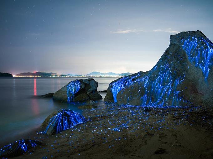 Đom đóm phát sáng (Bioluminescent) ở các núi đá ở Okayama tạo thành khung cảnh đẹp như trong cổ tích. Bạn nên đến đây vào ban đêm để tưởng thức cảnh tượng ngoạn mục này.