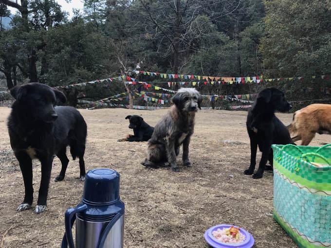 """Thủ đô có nhiều chó hoang hơn cả ôtô  Có thể điều này nghe rất kỳ lạ nhưng kỳ thực ở Thimphu đi ra đường bạn sẽ thấy chó hoang ở mọi nơi và có thể ngủ bất cứ đâu chúng thích. Và với niềm tin tôn giáo mạnh mẽ trong Phật giáo, người dân nơi đây không giết hại mà còn chăm sóc chúng. Thức ăn thừa trong các bữa ăn dã ngoại nên để lại cho chúng. Thực tế chó hoang ở Thimphu rất khỏe mạnh, được cho ăn và còn được mệnh danh là """"những con chó hoang hạnh phúc nhất thế giới""""."""