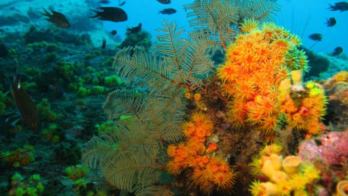 Koh Tang  Nằm cách đất liền 5 giờ di chuyển, Koh Tang được biết tới từ năm 1975. Hiện đảo không có người sinh sống nên môi trường biển được bảo tồn rất tốt, nước trong sạch, và còn gần với Koh Prins nên thích hợp để lặn ngắm. Đảo có 8 điểm lặn nổi tiếng với nhiều rạn san hô đẹp mắt và vô số sinh vật biển như sên biển nudibranch, cá nóc, cá đuối...