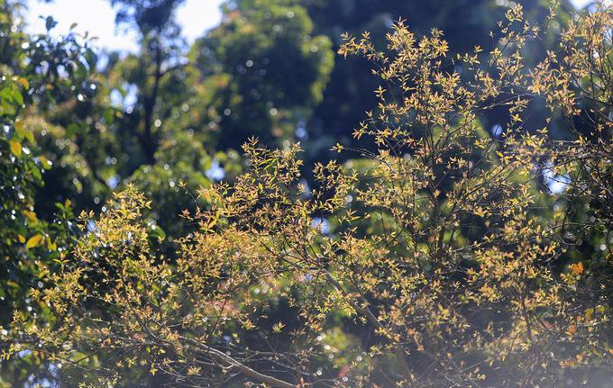 Sau khoảng mươi ngày, những cành lộc non sẽ chuyển thành màu xanh ngắt, trước khi hòa vào màu của rừng già. Cả vùng Đà Nẵng kéo dài đến Hội An (Quảng Nam) chỉ có bán đảo Sơn Trà được coi là nơi đa dạng sinh học. Đây là túi chứa nước ngọt cung cấp cho thành phố và hệ nước ngầm toàn bộ Đà Nẵng.