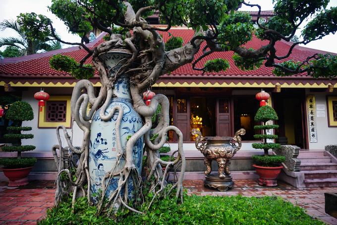 Những cây cảnh bonsai độc đáo khi được tạo hình trong chiếc bình gốm.