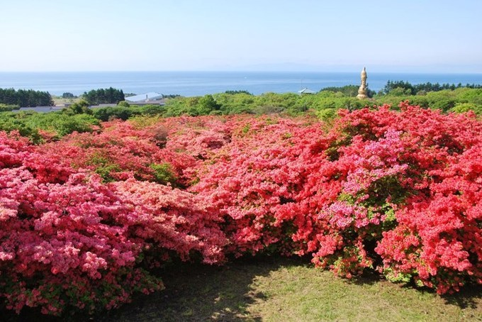 Hoa đỗ quyên ở Hokkaido, phía bắc Nhật Bản nở muộn hơn so với các vùng khác, thường vào giữa tháng 5. Lễ hội hoa đỗ quyên nổi tiếng nhất vùng này được tổ chức tại công viên hoa đỗ quyên nằm dưới chân núi lửa Esan từ giữa tháng 5 đến đầu tháng 6. Nơi đây có khoảng 600.000 cây đỗ quyên nở tạo nên tấm thảm hồng thắm dưới chân núi. Ảnh: hokkaidolikers.