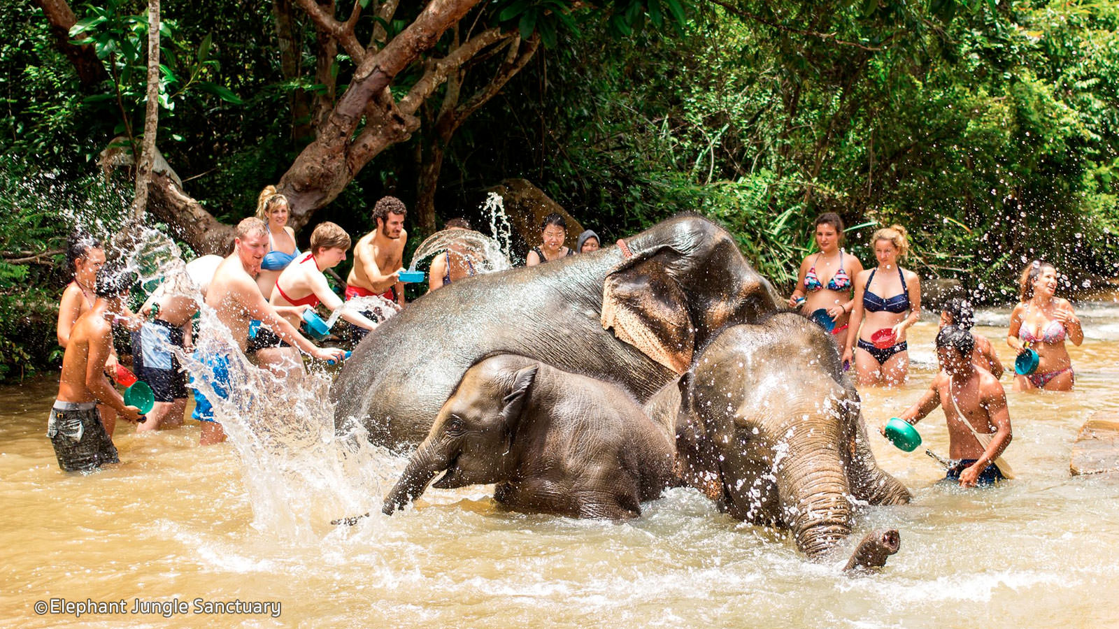 Tắm voi ở Elephant Jungle Sanctuary. Ảnh: asiawebdirect