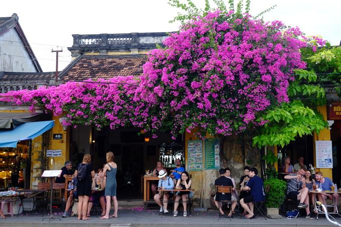 Mùa hè cũng là mùa hoa giấy nở ngập tràn ở Hội An, thu hút ánh nhìn của du khách.