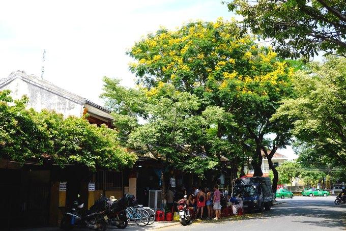Những cây hoa điệp cũng nở vàng rực và rụng đầy trên phố, trên mái nhà. Trong hình là góc phố Phan Chu Trinh nơi có hàng bánh mì Phượng nổi tiếng. Quán nhỏ mỗi ngày đón hàng trăm khách nằm nép mình dưới bóng điệp.