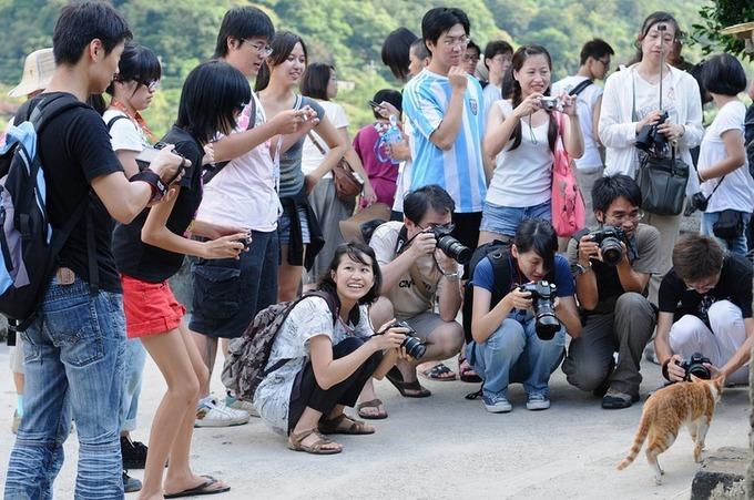 """Mỗi ngày, hàng trăm khách du lịch đến Houtong chỉ để chơi cùng mèo. Chúng trở thành """"celeb"""" bất đắc dĩ, đi đâu cũng có hàng tá ống kính chụp đủ kiểu."""