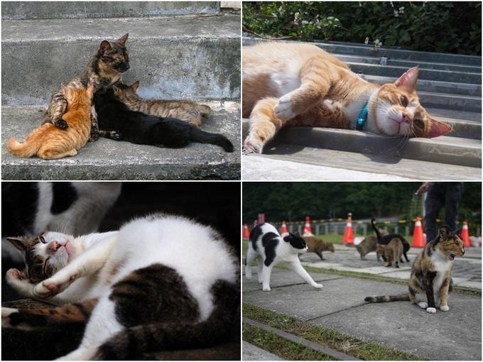 Dân số loài mèo còn đông hơn người. Có khoảng hơn 100 giống mèo sống ở đây còn số lượng thì càng ngày càng tăng. Bạn có thể bắt gặp chúng nằm dài trên bậc thang, đang ăn, thản nhiên cho con bú hay hưởng thụ ánh nắng mặt trời khắp mọi ngõ ngách.
