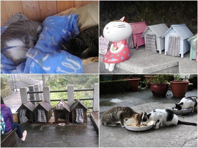 Những ngôi nhà gỗ nho nhỏ có cả rèm che cho mèo trú mưa nắng dựng bên lề đường. Chúng không bao giờ bị bỏ đói, thậm chí mùa đông còn có chăn ấm nệm êm để ngủ ngon giấc.