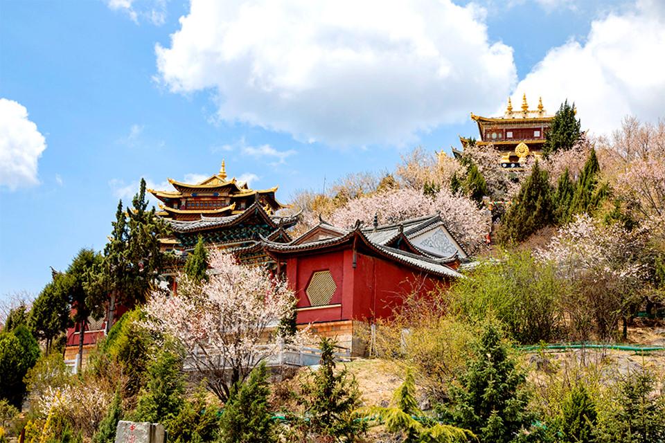 Tu viện Songzanlin: Công trình kiến trúc Phật giáo tiêu biểu của người Tạng nằm trên một ngọn đồi cao tại Shangrila. Đến thăm tu viện Songzanlin, bạn sẽ phải tốn hàng giờ để chiêm ngưỡng hết nét đẹp tinh túy của những pho tượng Phật đồ sộ, những tấm phướn rực rỡ đa dạng, trần các sảnh thờ được tô vẽ cầu kỳ cùng kỹ thuật điêu khắc tinh xảo theo văn hóa đặc trưng của người Tạng.