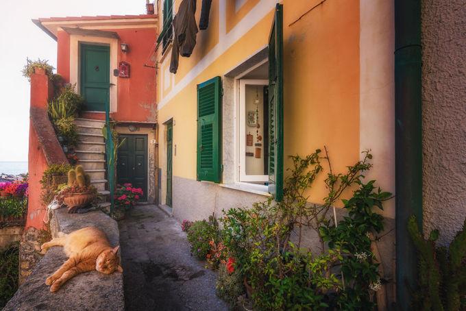 Nhiếp ảnh gia Albert Dros đã thực hiện một bộ ảnh tại Italy nhưng thay vì chụp những địa danh nổi tiếng ở Rome, Venice, Milan..., anh lại tìm đến những con hẻm nhỏ vô danh ở Cinque Terre, tây bắc đất nước hình chiếc ủng. Hình ảnh chân thực, giản dị nơi ngõ vắng đầy sắc màu, với những chú mèo béo nằm ngủ thảnh thơi đem lại cảm giác bình yên cho người xem.