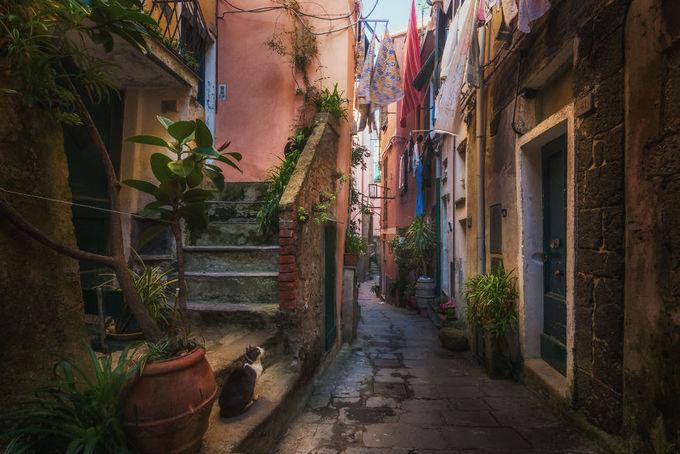 Đến Cinque Terre, người ta thường chăm chăm check in ở khu vực ngoài vịnh biển với những dãy nhà tầng tầng lớp lớp đầy sắc màu nhưng ít ai tìm đến không gian tĩnh lặng phía sau đó. Albert đã len lỏi vào bên trong để ghi lại những hình ảnh chân thực nhất.