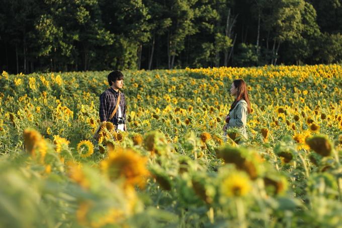 """Giống nhiều vùng khác ở Hokkaido, phần lớn thời gian trong năm, thị trấn nhỏ này chìm trong tuyết trắng. Mùa hè ngắn ngủi trong vòng 2 tháng nhưng nhiệt độ cao nhất cũng chỉ ở 18 độ C. Chính vì vậy mà đoàn làm phim """"Nhắm mắt thấy mùa hè"""" cũng gặp không ít trở ngại khi chọn Higashikawa quay ngoại cảnh. Và một trong những cảnh ấn tượng nhất trong phim là cánh đồng hoa hướng dương, nơi hai diễn viên chính gặp nhau."""