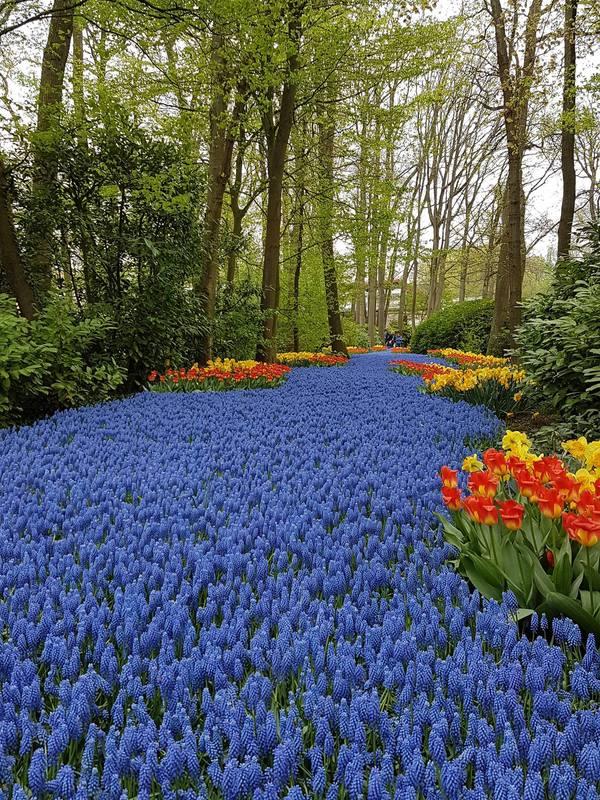 Khung cảnh Vườn châu Âu thực sự lột xác khi mùa xuân tới với hàng triệu bông hoa đủ loại bung nở và khoe sắc.
