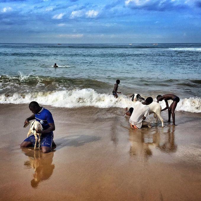 Những con cừu tắm biển  Từng được lấy làm bối cảnh bộ phim Mùa hè bất tận (The Endless Summer), Senegal là một trong những quốc gia có biển đẹp nhất để chơi lướt sóng.  Ngay cả những con cừu cũng lướt sóng - nhưng chỉ vào chủ nhật hàng tuần, theo New York Times. Nếu đến thủ đô Dakar vào chủ nhật, du khách sẽ thấy nông dân dẫn đàn cừu ra bờ biển để thực hiện nghi lễ gột rửa. Chúng sẽ được tắm sạch sẽ, sửa móng và bơi lội thỏa thích với sóng trước khi quay trở lại cuộc sống đồng cỏ thường ngày. Ảnh: Pinterest.