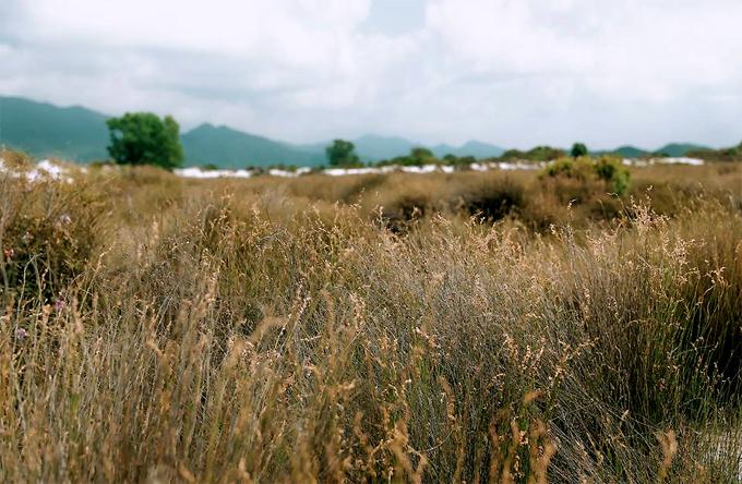 Bãi cỏ châu Âu  Nằm cạnh sông là một cánh đồng cỏ như đưa du khách tới vùng đất châu Âu nào đó. Bạn có thể thoải mái tạo dáng, và chụp góc từ trên cao xuống sẽ giúp có những bức ảnh ấn tượng hơn.