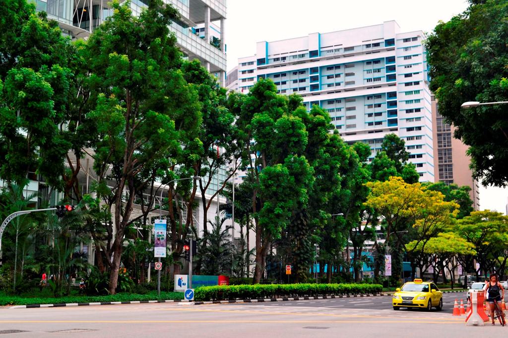Tưởng như tại Singapore, cây cối có thể mọc lên ở mọi nơi.