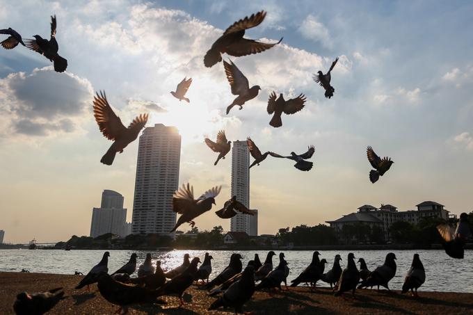 Sau chùa là bến thuyền trên sông Chao Phraya, cũng là nơi trú đậu của hàng trăm con bồ câu để du khách có thể ngắm cảnh và chụp hình lưu niệm.
