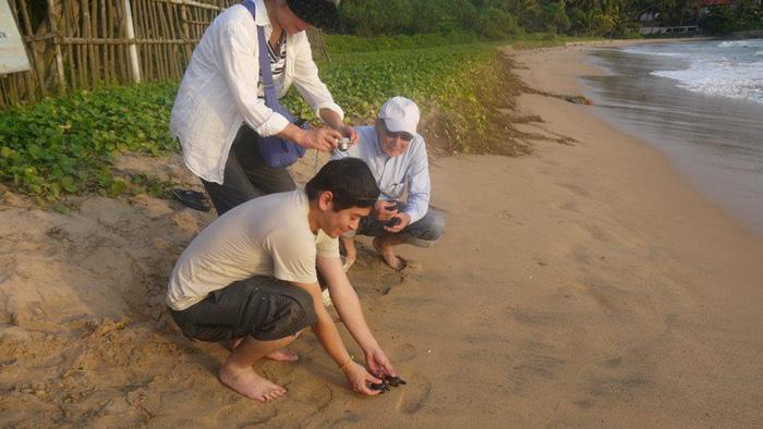 Những bé rùa được thả ra biển lúc hoàng hôn