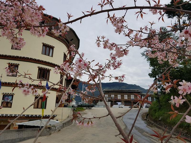 Mùa xuân ở Bhutan - Ảnh: Hải Piano