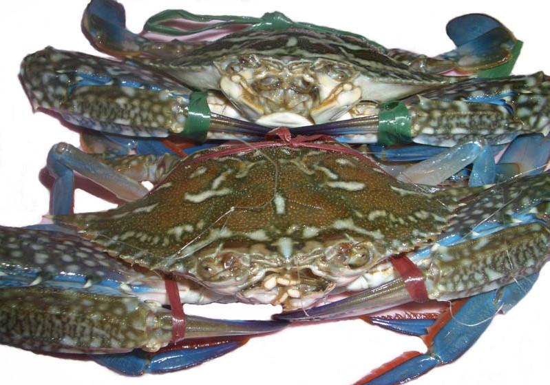 Những món hải sản nổi bật ở Cát Bà như tu hài luộc, bề bề rang muối, sam trứng nướng, ghẹ xanh. Ảnh: Khách sạn, nhà nghỉ