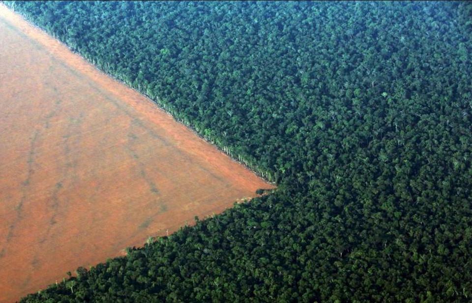 Hiện nay, rừng nhiệt đới Amazon đang phải đối mặt với vấn nạn đốt phá rừng bất hợp pháp. Ước tính mỗi năm, gần 1,08 tỷ hecta rừng bị đốt. Các tổ chức phi chính phủ và người nổi tiếng đang thực hiện nhiều chiến dịch giải cứu rừng Amazon, như tổ chức Rainforest Rescue.