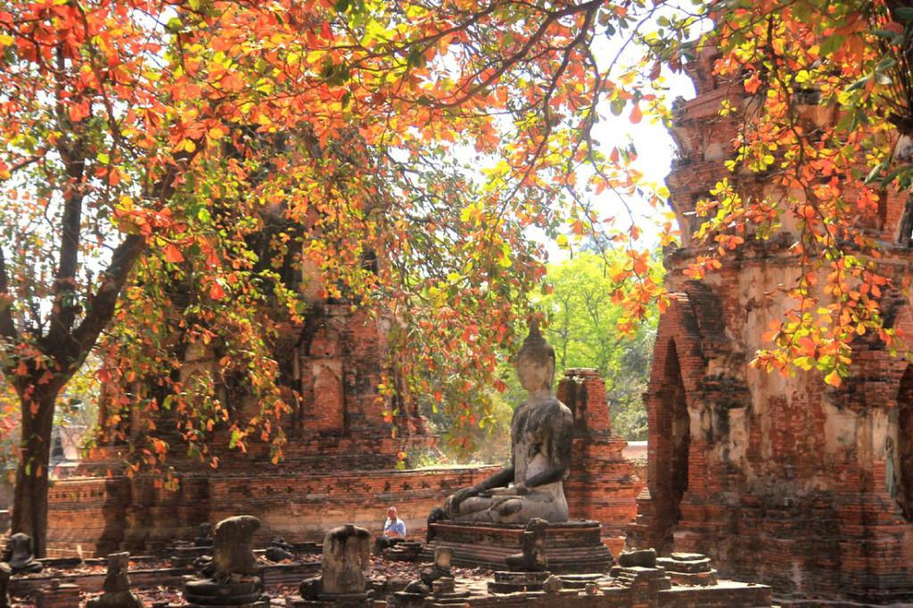 Các pho tượng được bao bọc bởi những hàng cây lá bàng đỏ tạo nên khung cảnh rất bình yên. Ảnh: Dương Quán Hạ