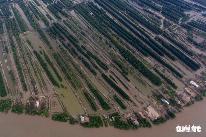 Hàng trăm vuông tôm của người dân ở huyện Ngọc Hiển, Cà Mau - Ảnh: HỮU KHOA
