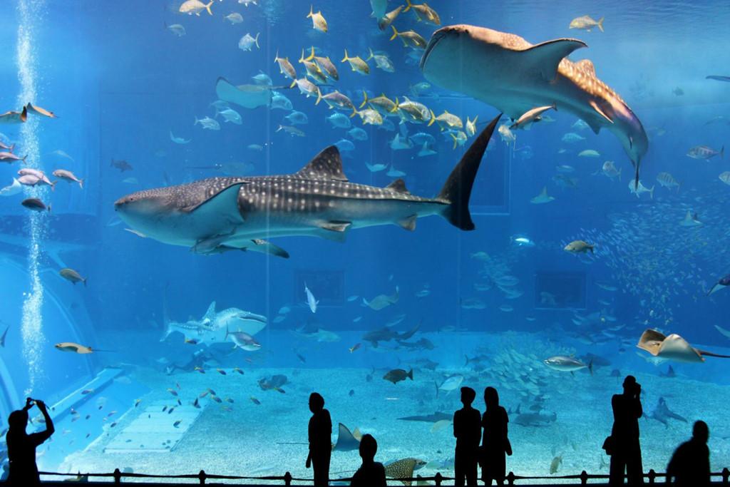 Thủy cung Kaiyukan , một trong những thủy cung lớn nhất trên thế giới. Ảnh: Isenpai.