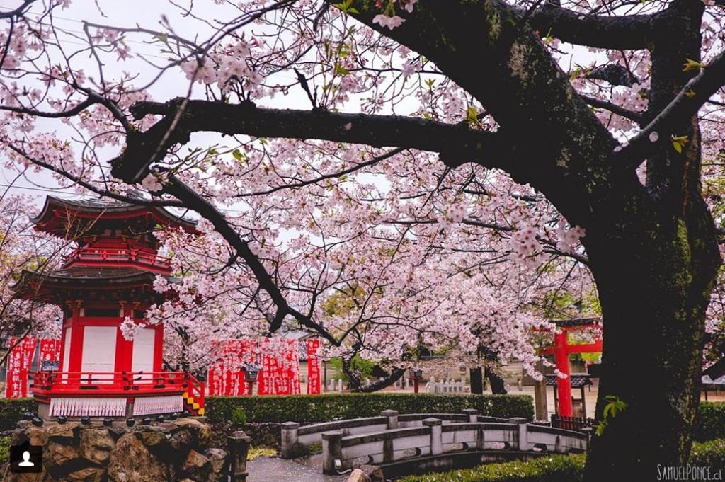 Đền Shitennoji mang vẻ kiến trúc cổ truyền thống, được xây dựng bởi hoàng tử Shotoku, người đã hỗ trợ việc đưa Phật giáo vào Nhật. Ảnh: Samuelponce.