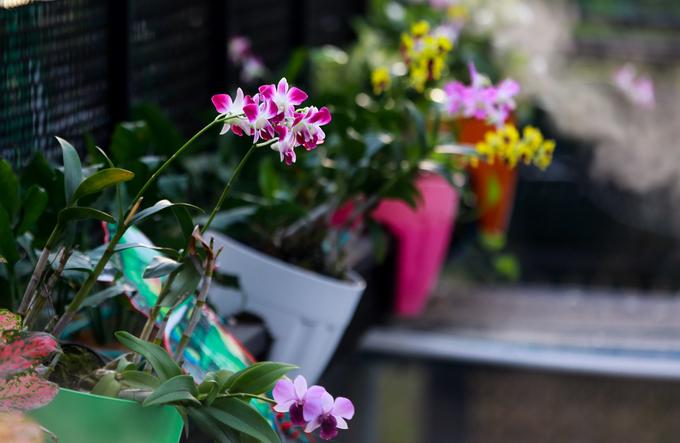 Rất nhiều loài hoa, cây xanh, tiểu cảnh đủ màu sắc được trang trí quanh quán cà phê.
