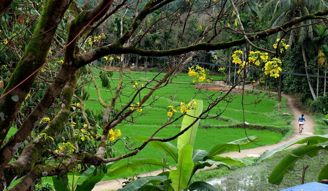Hoa nở ở Tiên Phước. Ảnh: Dương Minh Bình