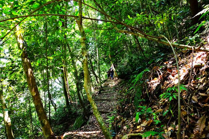 Không có nhiều du khách biết tới các tuyến trek trong rừng ở Ba Vì nên bạn có thể thỏa sức khám phá mà không sợ đông đúc. Đi bộ trong rừng vắng, chỉ có tiếng chân đạp lên thảm lá mục, tiếng chim hót, và tiếng lá xào xạc trên đầu khiến ai cũng cảm thấy khoan khoái.