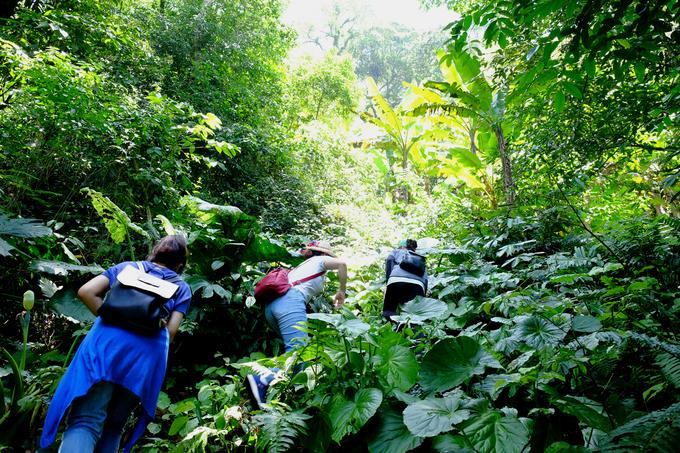 Những tuyến đi bộ tham quan các đền thờ, di tích Pháp... ở Ba Vì bạn hoàn toàn có thể tự đi, nhưng đối với trek trong rừng cần có hướng dẫn viên địa phương để đảm bảo an toàn. Hiện tại với người chưa có kinh nghiệm trek có thể mua tour một hoặc hai ngày của Active Travel để trải nghiệm tuyến đường rừng ít người biết này.