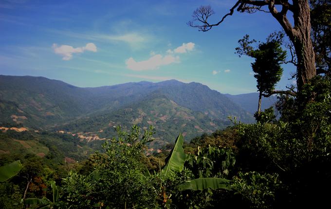 Đỉnh núi Ngọc Linh cao hơn 2.500 m nằm trên dãy Trường Sơn, trải dài ở ba tỉnh Quảng Ngãi, Kon Tum và Quảng Nam.  Phía Quảng Nam thuộc xã Trà Linh, huyện Nam Trà My, ở đó người dân trồng sâm dưới những cánh rừng cổ thụ.