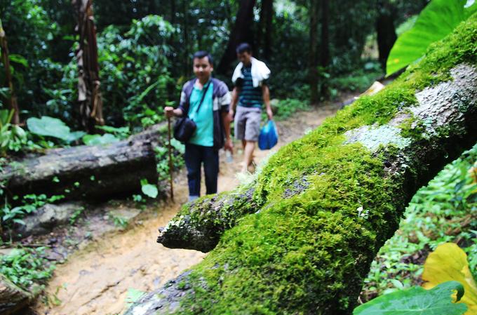 Đường lên núi đi theo lối mòn, luồn qua những cánh rừng cổ thụ rêu phong bám dày đặc vào thân cây.