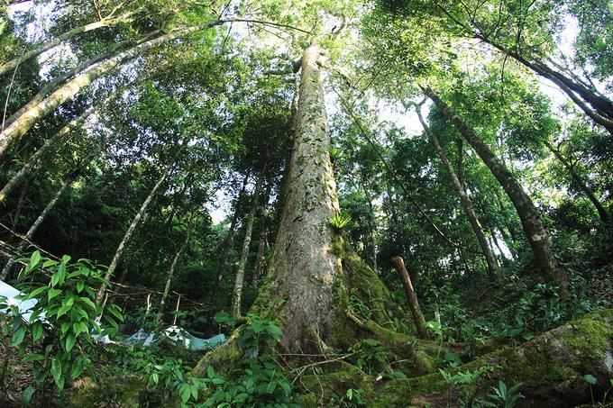 Núi Ngọc Linh là rừng đặc dụng, nhiều cây cổ thụ. Trên đường đi hầu hết có bóng cây che nắng.