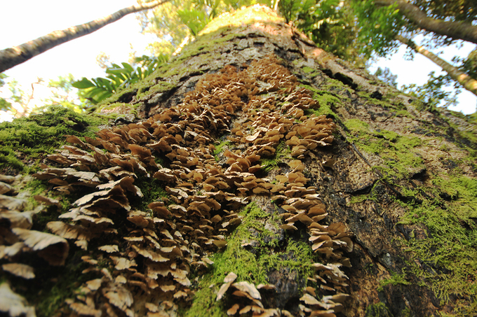 Nhiệt độ ở khu vực này vào mùa lạnh dưới 10 độ, mùa khô 25 độ nên thích hợp cho nhiều loại nấm phát triển. Chúng mọc quanh các thân cây với nhiều màu sắc khác nhau.