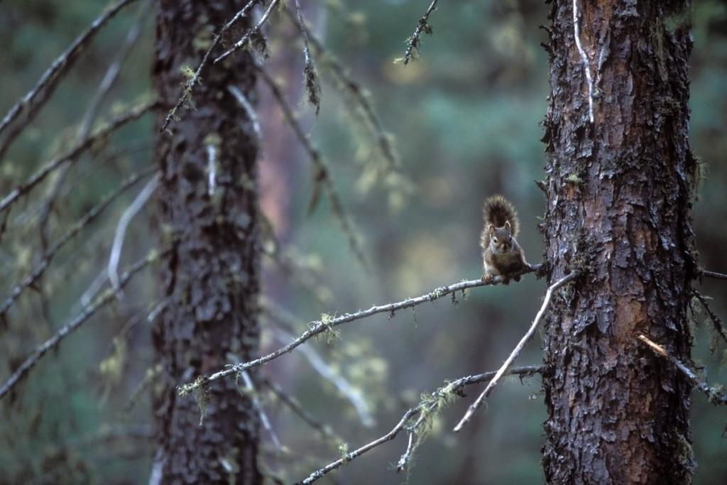 """Khu dự trữ sinh quyển Pimachiowin Aki, Canada Được mệnh danh là """"vùng đất của cuộc sống"""", khu dự trữ sinh quyển này bao gồm những dòng sông chảy xuyên qua các cánh rừng taiga rộng lớn, các hồ nước, đất ngập ẩm ướt."""