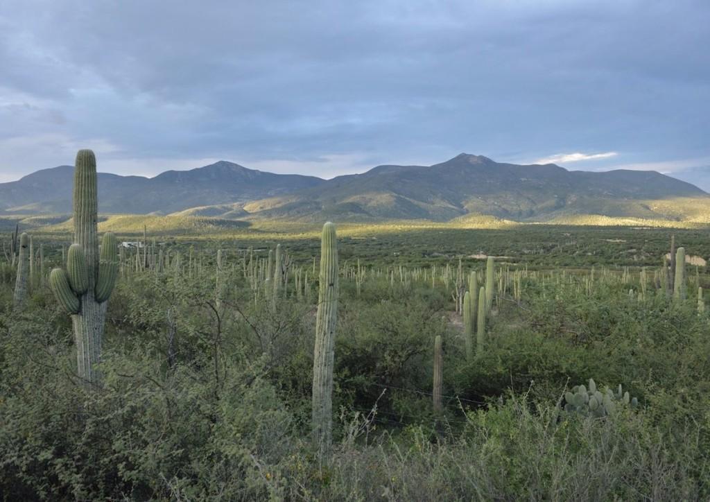 Thung lũng Tehuacán-Cuicatlán, Mexico Nơi này sở hữu số lượng lớn các loài xương rồng quý hiếm đang bị đe dọa ở cấp thế giới. Trong số đó có loài xương rồng hình ống, mọc dày đặc tạo nên phong cảnh độc đáo, đặc biệt là xương rồng Ceroid cao bậc nhất thế giới.