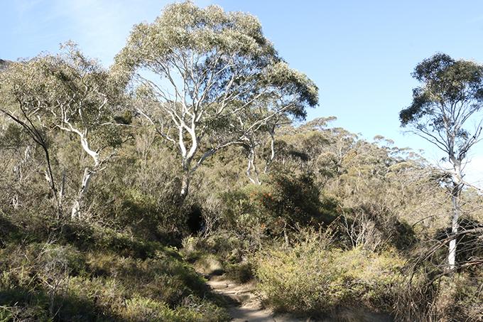 blue-mountains-ngon-nui-xanh-ky-la-o-australia-ivivu-6