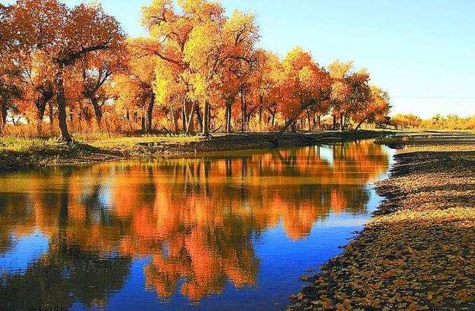 Bốn mùa ở Nội Mông được ví như những mảng màu sắc khác biệt của xanh, vàng, trắng. Trong hình là mùa thu ở Ngạch Tế Nạp Kỳ. Ảnh: Baidu.