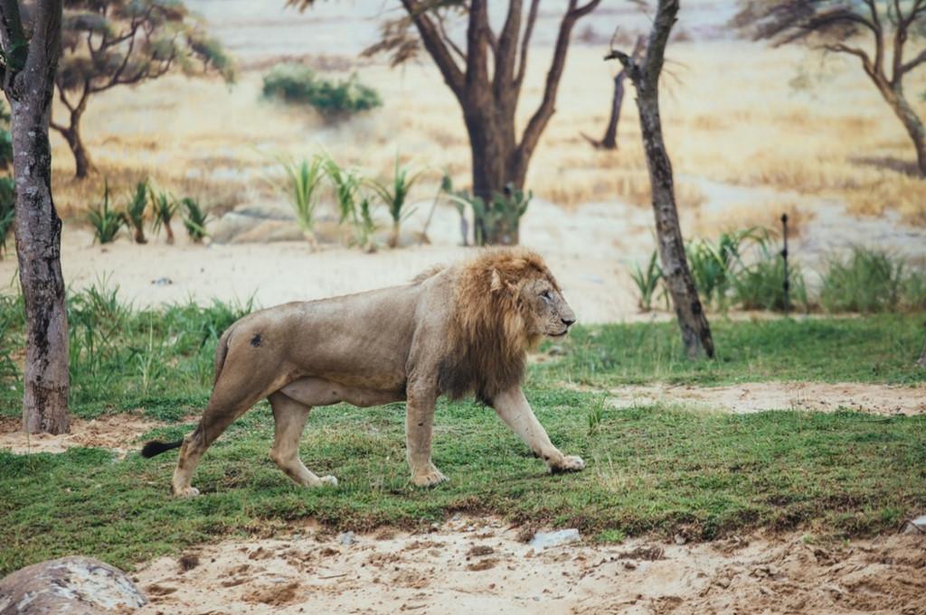 Là một trong những quốc gia mạnh dạn đầu tư vào mô hình này, Việt Nam sở hữu khu bảo tồn động vật hoang dã nằm ở Vinpearl Land Nam Hội An. River Safari tại đây có 42.000 cá thể thuộc 39 loài quý hiếm như hổ Bengal, sư tử trắng, tê giác, linh dương, hươu cao cổ…
