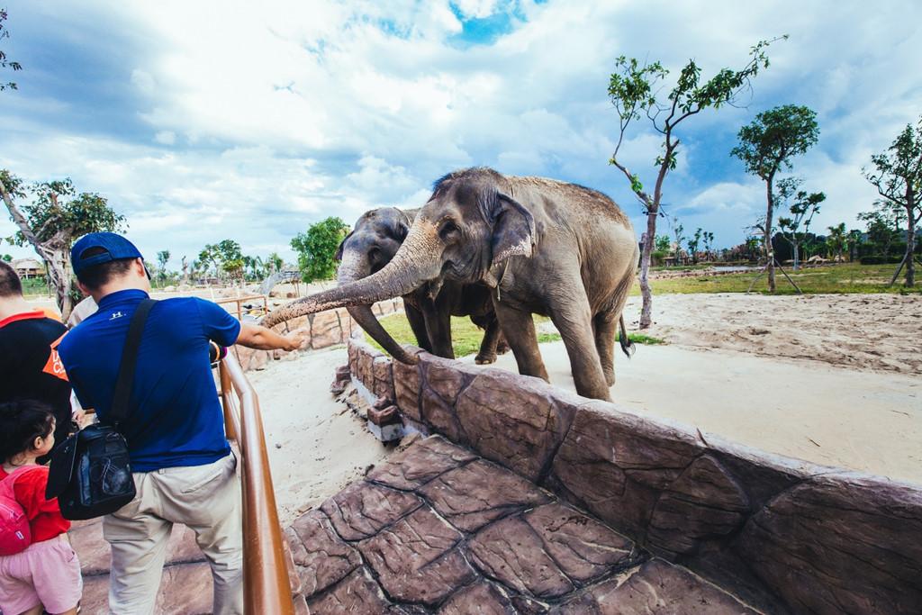 Để giữ yên tĩnh, du khách cần bình tĩnh để không gây ra tiếng động quá lớn khi chứng kiến những chú voi lững lờ qua sông hay chú hươu cao cổ ghé đầu vào mạn thuyền để xin ăn các bé. Sự thân thiện của các loài động vật biến nơi đây thành điểm du lịch gia đình thú vị, giúp các bé có cơ hội khám phá tự nhiên.