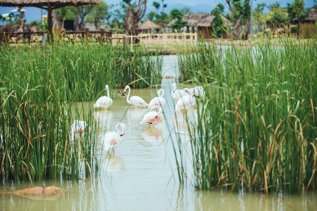 Bắt đầu hành trình khám phá vườn thú, chiếc thuyền khẽ lướt nhẹ trên sông vào thế giới của các loài chim thuỷ cầm. Lấp ló sau những bụi cây um tùm, rậm rạp là hàng trăm cá thể vịt trời, bồ nông, cò, vạc, hồng hạc…