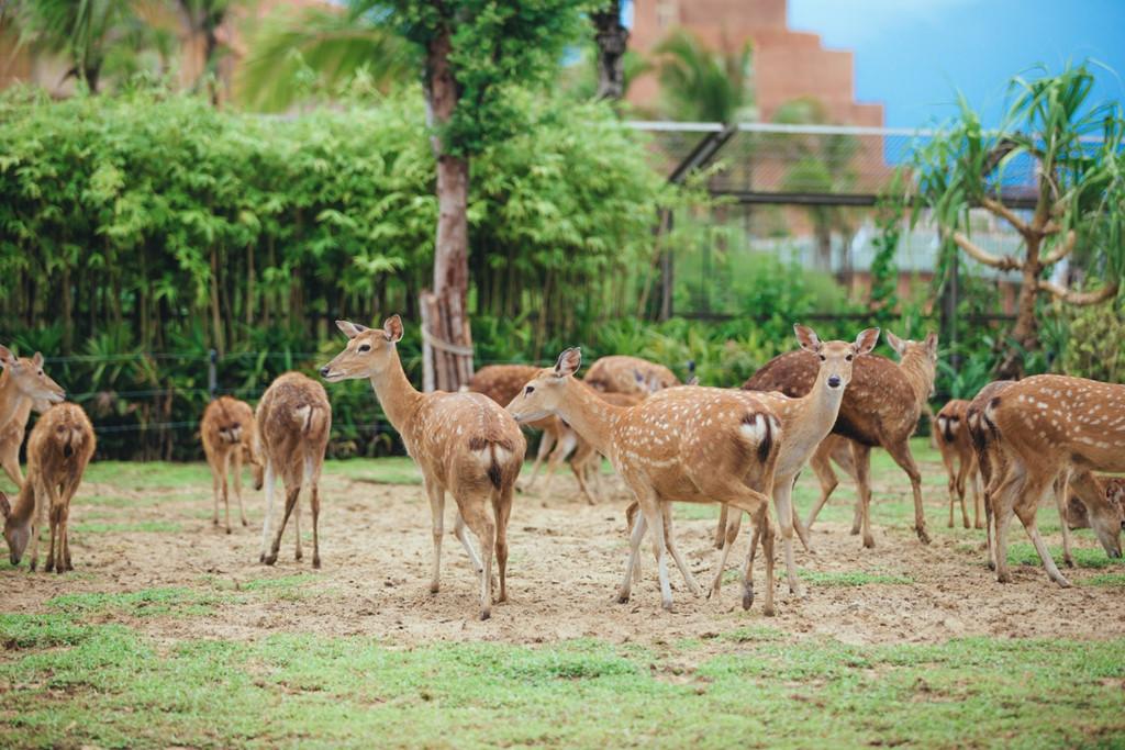 Thế giới động vật ăn cỏ cũng xôm tụ với hươu, nai, hoẵng, lạc đà. Lạc vào đây, du khách sẽ cảm nhận được sự hiền hòa mà những loài này mang lại. Đặc biệt, bạn có thể thoải mái giao lưu cùng các chú thú theo hướng dẫn.