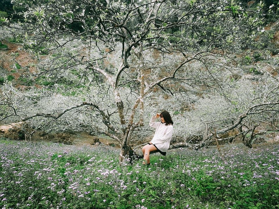 Và đặc biệt, lý do thôi thúc du khách đến với Mộc Châu đó là những mùa hoa tuyệt đẹp. Mùa xuân tới, hoa đào, hoa ban, hoa mận nở rộ, đua nhau khoe sắc thắm trên núi đồi. Mùa đông là mùa của hoa dã quỳ, hoa cải trắng. Những cánh đồng hoa cải mênh mông như tấm thảm trắng tinh khôi trải dài xa ngút ngàn. Còn nếu đến Mộc Châu vào mùa hè, trong tiết trời mát mẻ, bạn sẽ gặp gỡ với mùa mận chín. Đây cũng chính là địa điểm lý tưởng để bạn trốn cái nóng oi bức. Ảnh: Nguyễn Thanh Huyền.