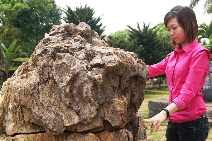 Bảo tàng Gia Lai, nơi lưu giữ các hiện vật văn hóa, lịch sử truyền thống của đồng bào các dân tộc trong tỉnh, cũng có một gian trưng bày các mẫu hiện vật của gỗ hóa thạch.