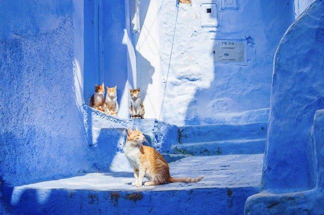 lac-vao-me-cung-xanh-dep-me-hon-xu-nghin-le-mot-dem-morocco-ivivu-8